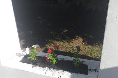 На клумбах Коркино расцвел триколор
