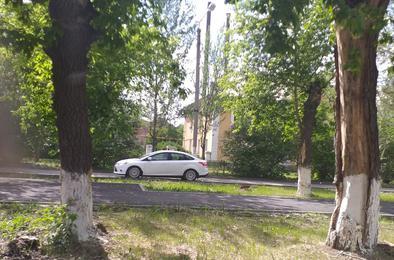 Белить деревья в городе глупо. Мнение челябинского урбаниста