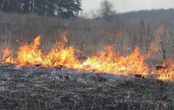 Тополиный пух, жара - пожаров в Коркинском районе стало больше