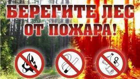 Закон встал на защиту леса